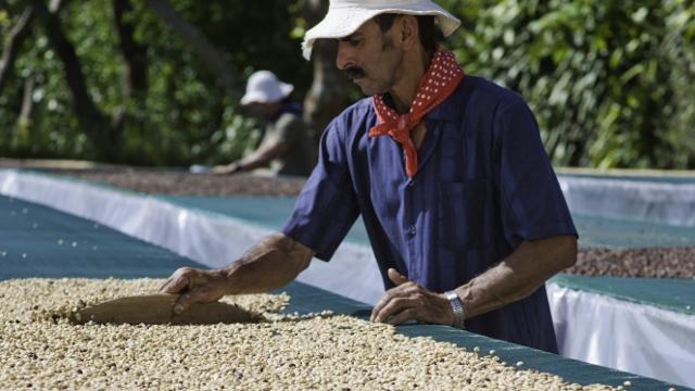 Finca Rosa Blanca Coffee, Heredia