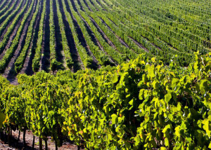 Best Wine Destinations in South America