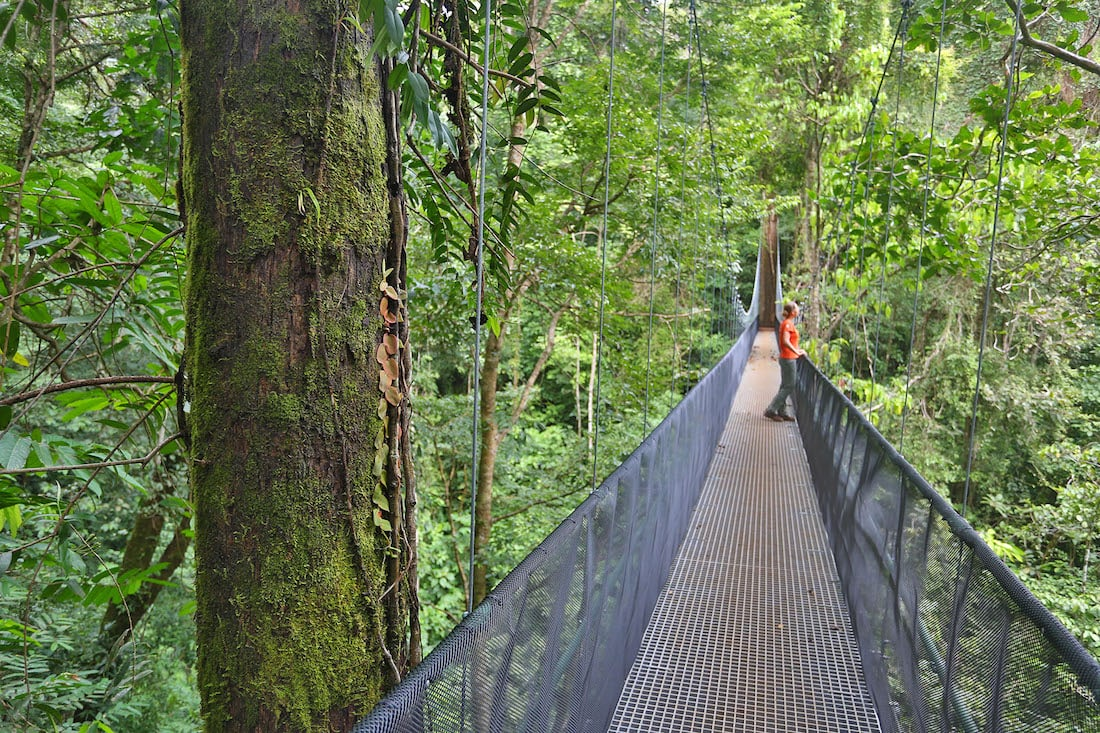 Osa Peninsula's impressive forest bridges.