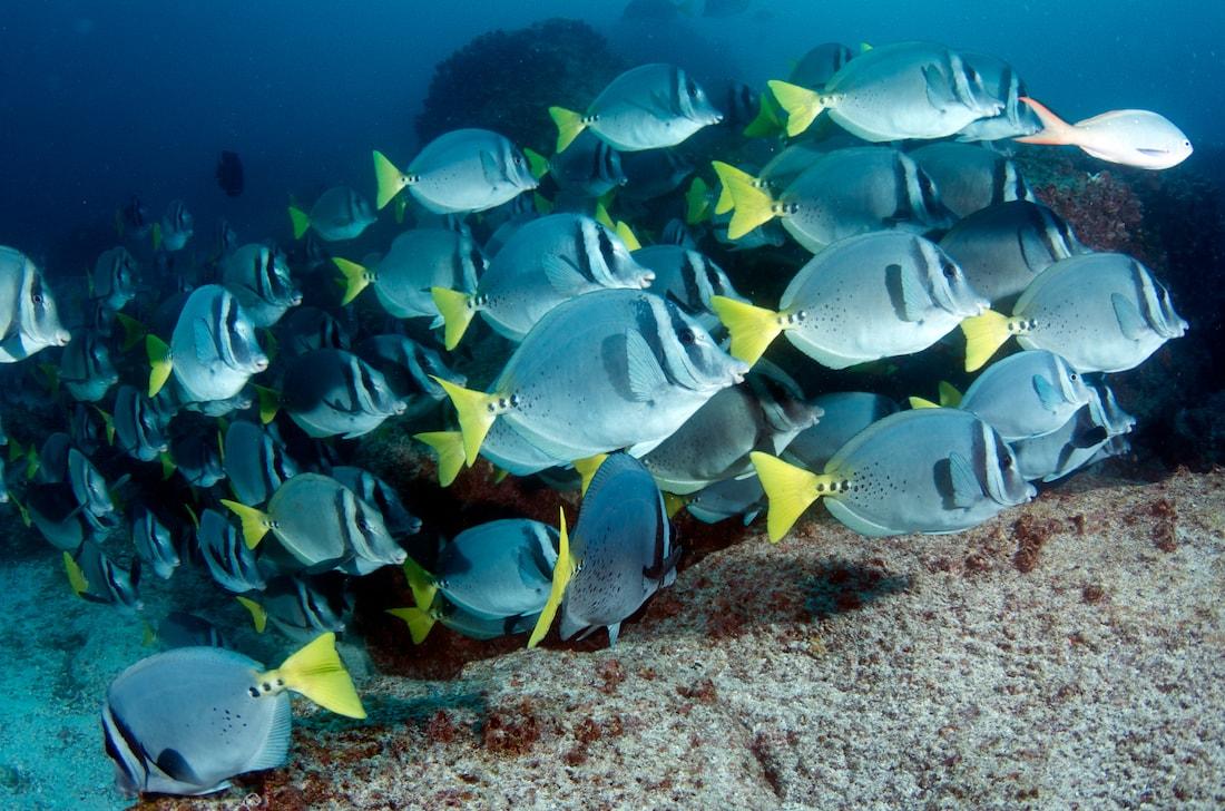 Galapagos Sea Life