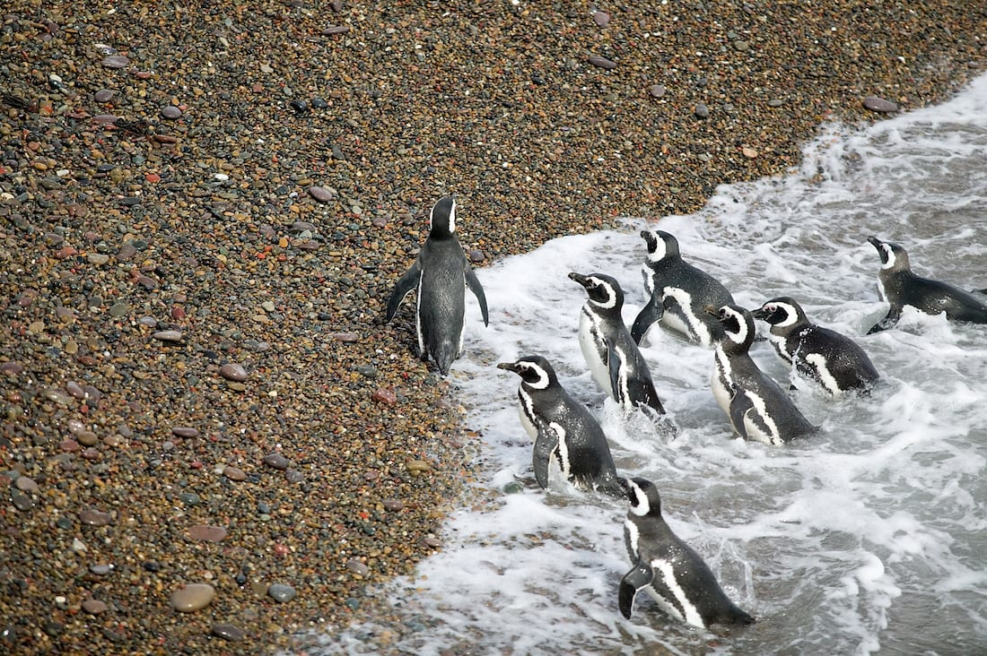 Penguins in Puerto Madryn.