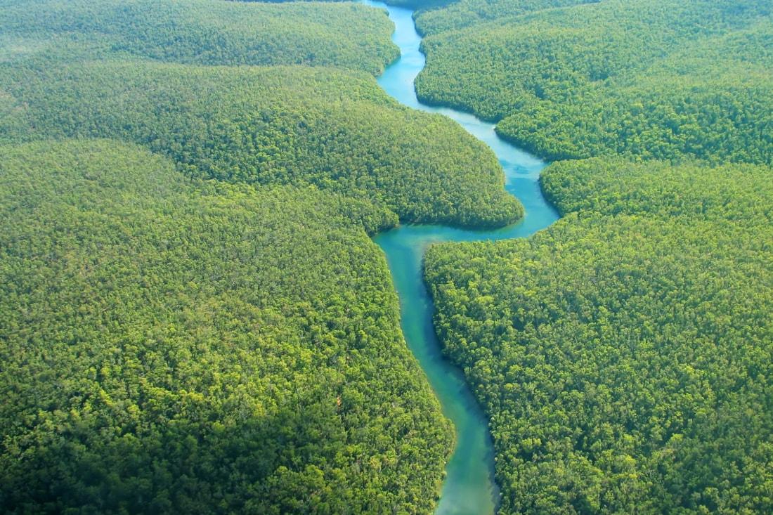 The Amazon - Johnny Lye