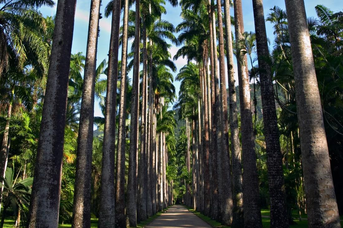 Rio de Janeiro, Botanical Gardens