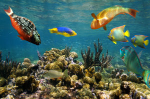 San Andres is a perfect destination for divers