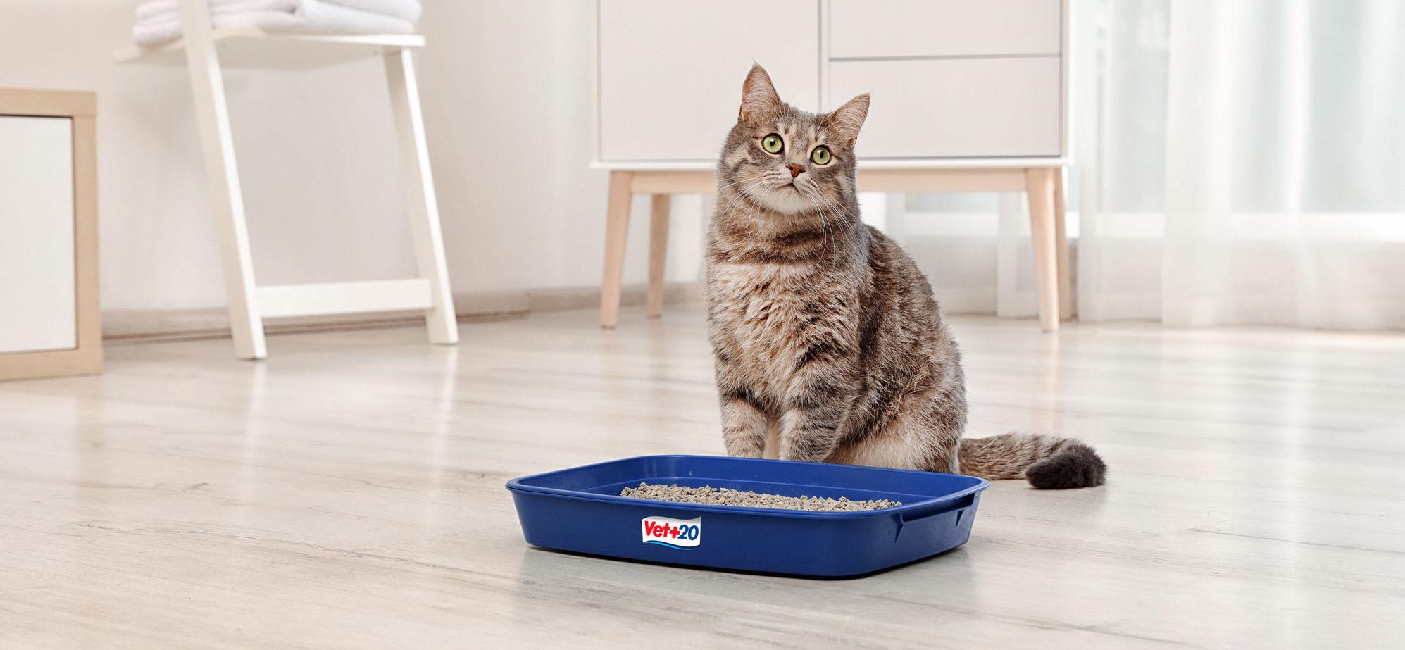 Gato ao lado da caixa de areia
