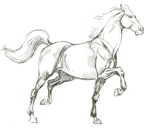 horse drawing pencil step easy simple sketch drawings horses sketches assignments charcoal notes getdrawings beginners cartoon google beginner line both