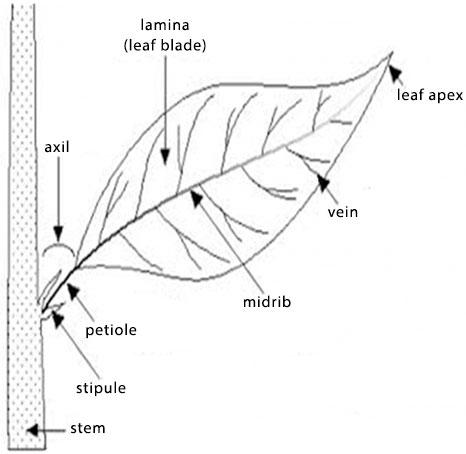 SS1 First Term Biology Practical (Marking Guide