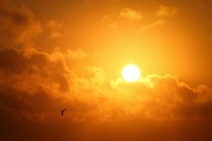 ea630-sun