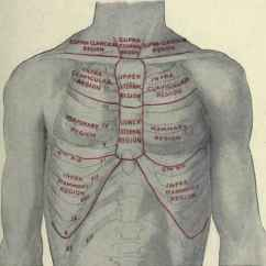 Anatomical Heart Diagram Posterior 1940 9n Ford Tractor Wiring Halfway – The Sixth Rib | Classical Osteopathy In Ontario