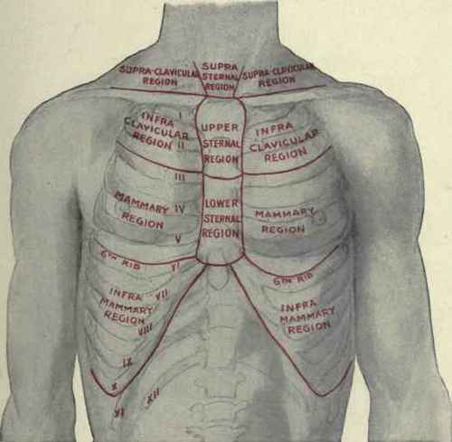 anatomical heart diagram posterior extension cord auf deutsch halfway – the sixth rib | classical osteopathy in ontario