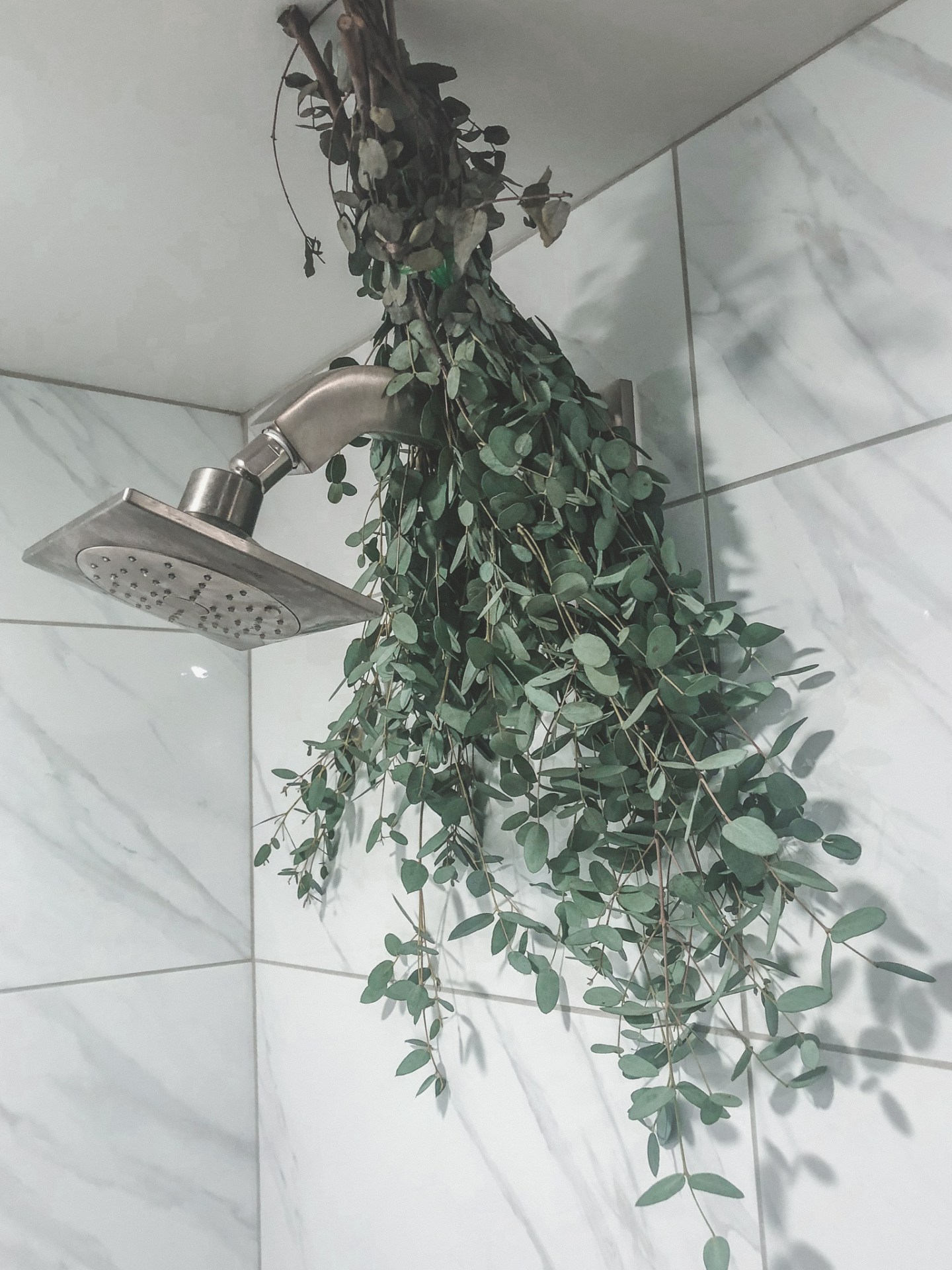 Elevate Your Shower With Eucalyptus