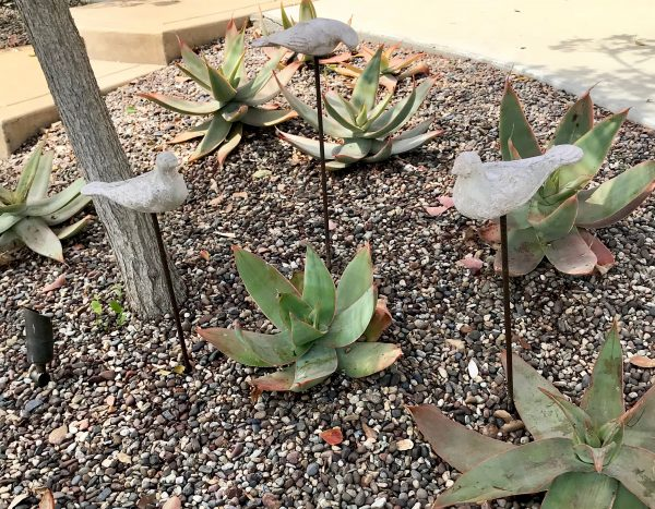Drought Tolerant Plants for Curb Appeal
