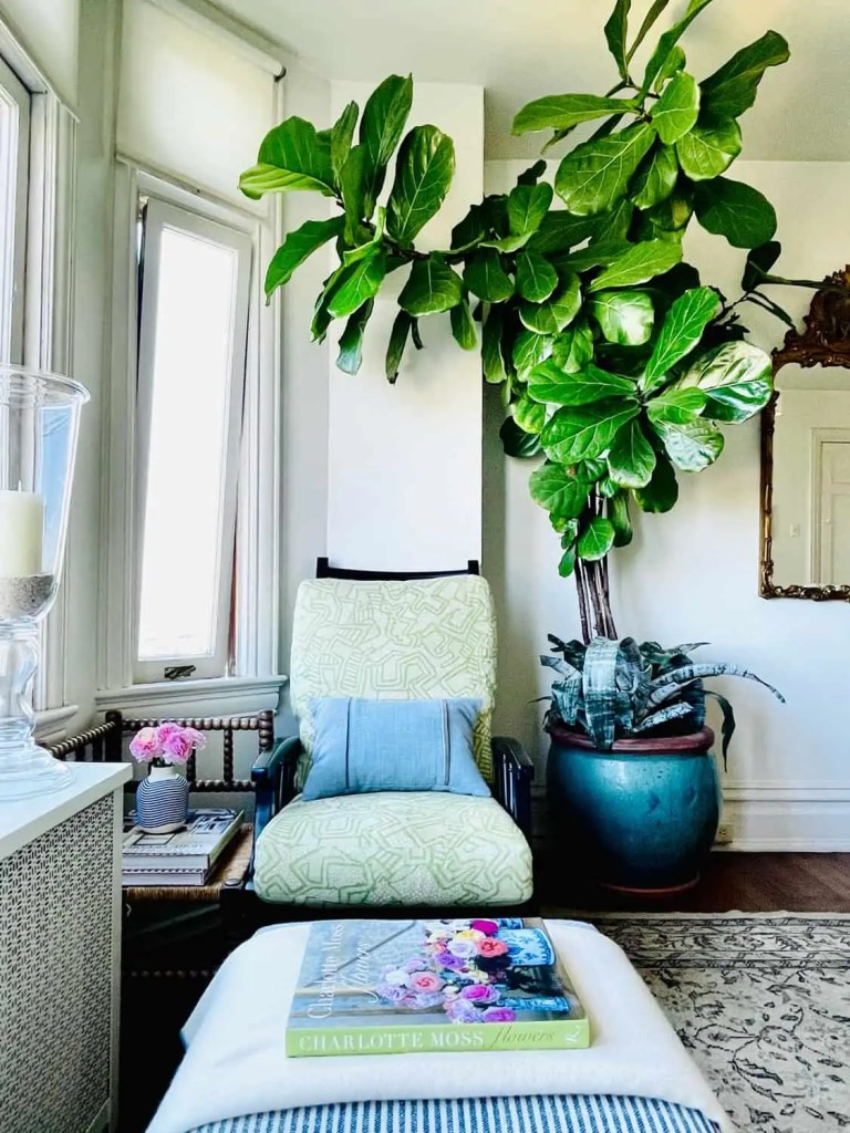 House Plant Tips