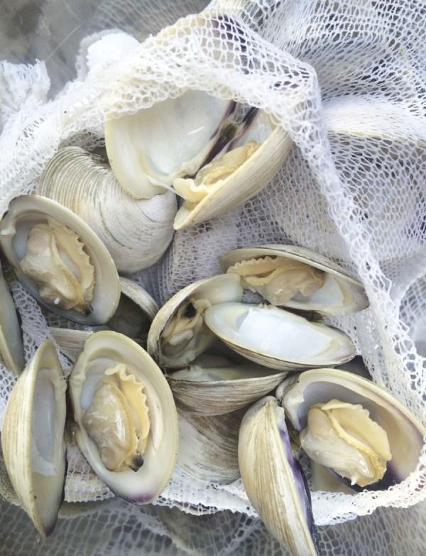 clambake Catanese Classic Seafood