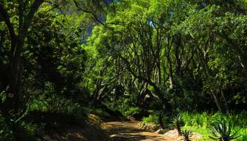 South Africa Driving Tour with Classic Travelling - Kirstenbosch