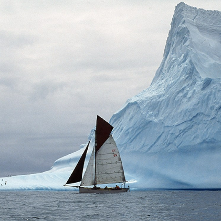 Curlew-with-iceberg
