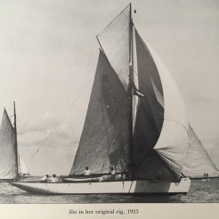 Ilex, 1925
