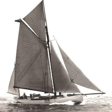 Tern IV