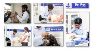 Animal Clinic located in Kadawatha
