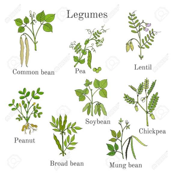 legumes pasture and forages agric science classnotesng