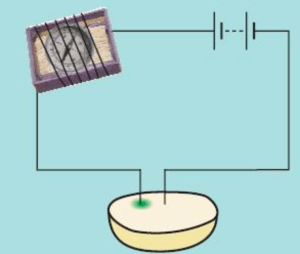 Electrical conductivity of potato