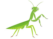 free insect clipart - clip art
