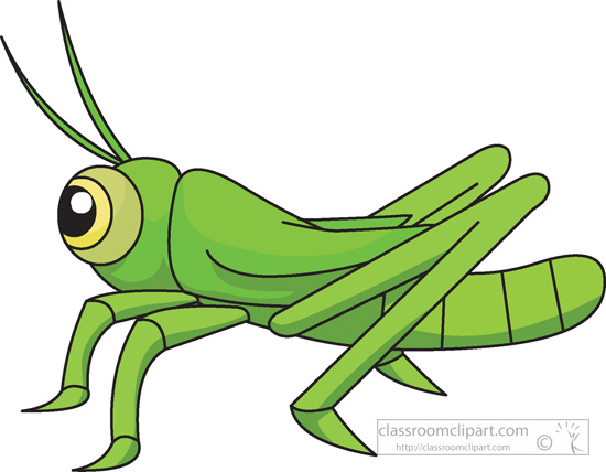 insect clipart clipart- grasshopper-insects-978