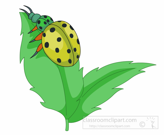 insect clipart yellow-lady-bug-insect-leaf-clipart-126