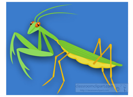 animals praying-mantis-insect-clipart