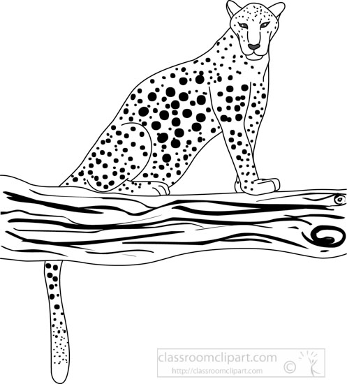 Animals : leopard_312_04A_outline : Classroom Clipart