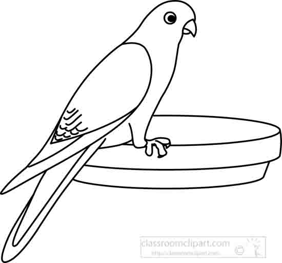 Animals : parakeet_outline : Classroom Clipart
