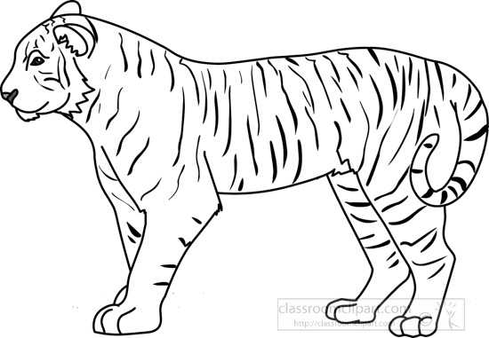Animals : tiger_312_01A_outline : Classroom Clipart