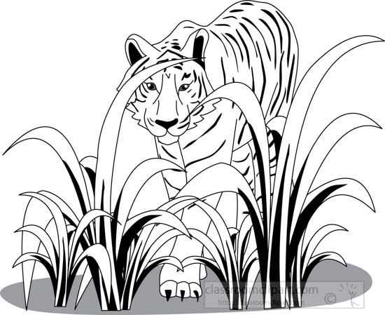 Animals : tiger_312_02A_outline : Classroom Clipart