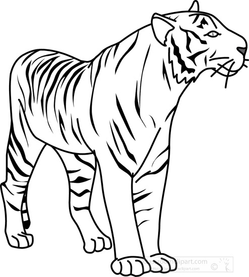 Animals : tiger_32804_outline : Classroom Clipart