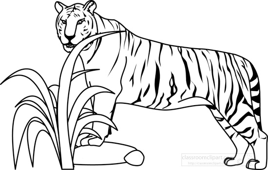 Animals : tiger_32805_outline : Classroom Clipart