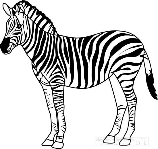 Animals : zebra_328_3_outline : Classroom Clipart