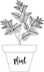 Plants Black and White Outline Clipart herb mint in labeled planter black white outline clipart Classroom Clipart