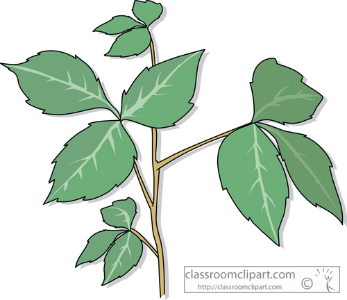 green ivy clipart