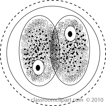 Science : cell_division2 : Classroom Clipart