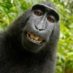 Best Prank Call Websites of 2019 – Free Fake Call, Fun Call,… Have Fun!