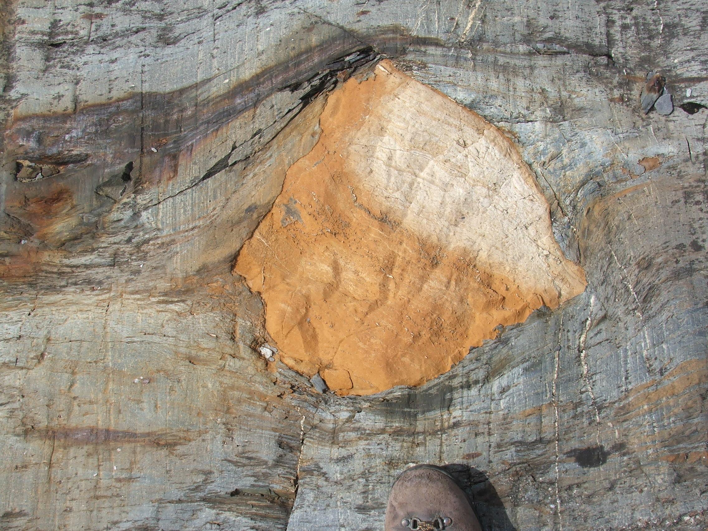 Clast of laminated carbonate in turbidite succession (© 2008 clasticdetritus.com)