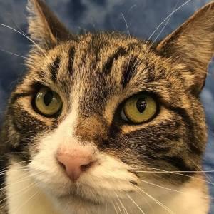 Clatsop County Animal Shelter Pet of the week Eli