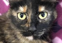 Clatsop County Animal Shelter pet of the week mabeline