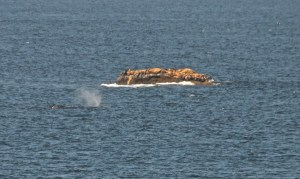 Whale Watching Oregon Coast Cape Flattery Whale via Douglas Scott