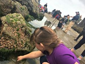 Haystack Rock's intertidal zone