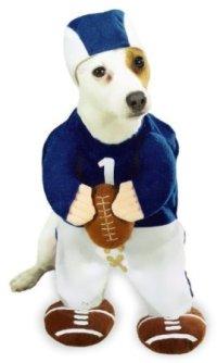 Amazon Enigmas: More Halloween Costumes for Dogs (Humor)
