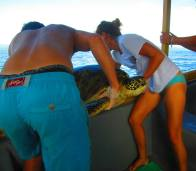 Trapping green sea turtles