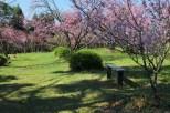 Parque-do-carmo-cerejeiras_34