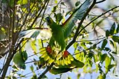 Ibirapuera-birdwatching-abr16_05