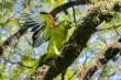 Ibirapuera-birdwatching-abr16_07